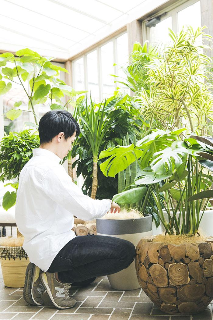 観葉植物 お任せ(8号鉢)
