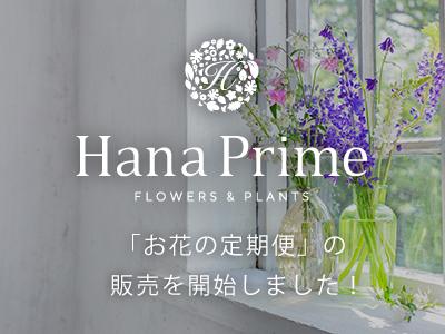 「お花の定期便」の販売を開始しました!