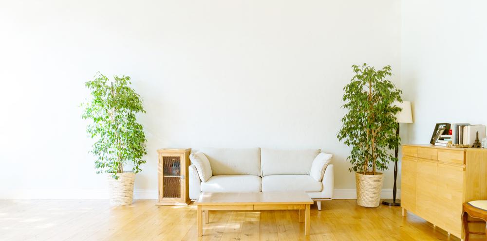 新築祝いに贈るおすすめの観葉植物